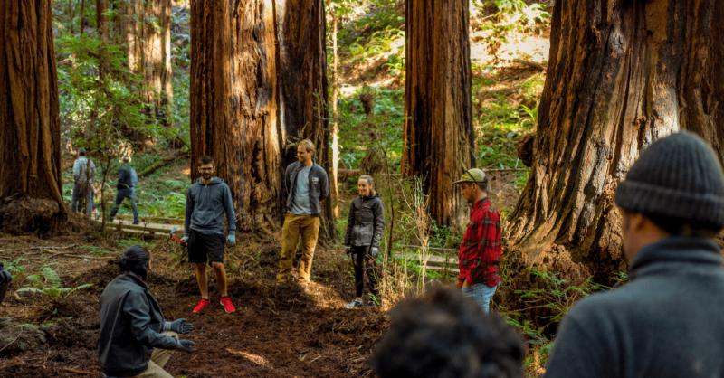 California-Redwood-Trees