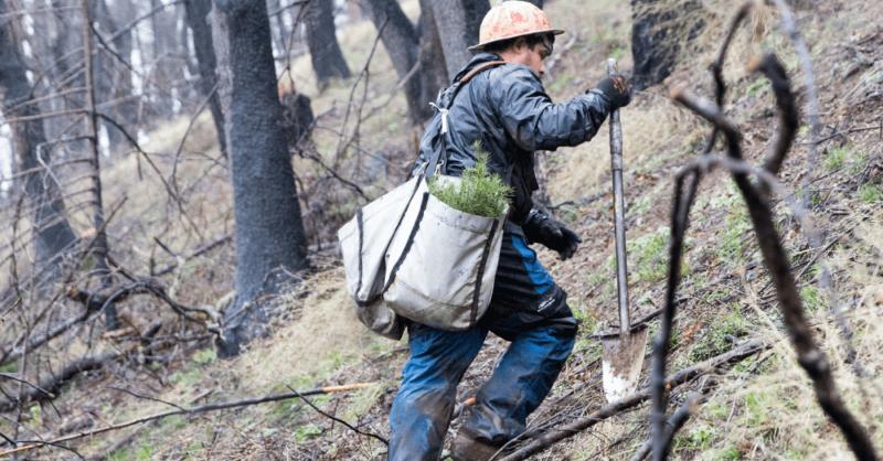 California-fire-restoration_2