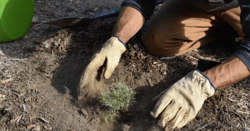 California-hands-in-the-dirt